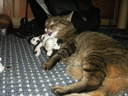 Srikki Catnip
