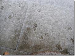 SchneePfotenweb