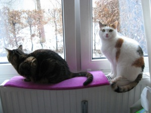 Schneeflocken sind super - aber nur, wenn man im Warmen sitzt...