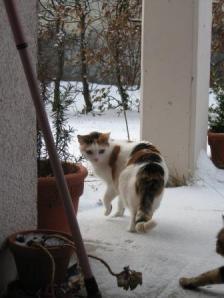 Iiiih, Schnee! Fleckli im Februar 2009.