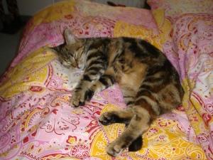 Einer Katze zu widerstehen ist nicht leicht... Foto: Lena Landwerth
