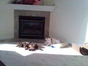 Sonnenstrahlen und künstliche Wärmequelle - was will man als Katze mehr? Foto: Lena Landwerth
